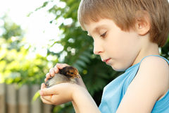 Boy cute hugs chiken in hand nature summer outdoor Stock Image