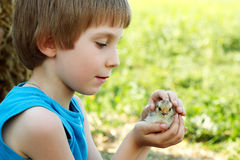 Boy cute hugs chiken in hand nature summer outdoor Stock Photo
