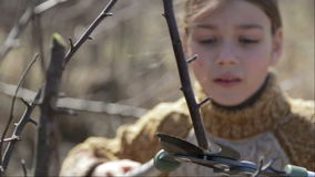 The boy cuts the trees in the garden with a pruner. The child helps to trim the trees in the park in the spring. stock video
