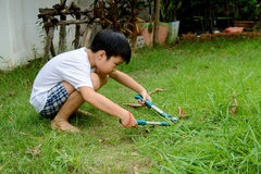 Boy cutting grass Stock Photo