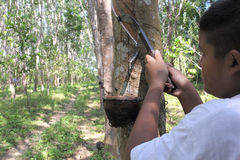 Boy cutting rubber tree Stock Image