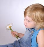 Boy with daisies Stock Images