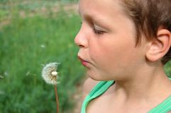 Boy and dandelion Royalty Free Stock Images