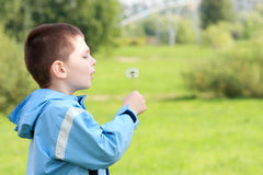 Boy and dandelion Royalty Free Stock Image