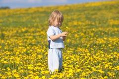 Boy with a dandelion Stock Photos