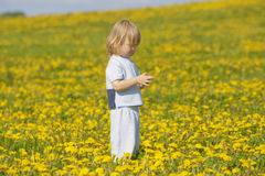 Boy with a dandelion Royalty Free Stock Image