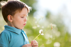 Boy with dandelion. Cute 4 years old boy with dandelion outdoors at sunny summer day royalty free stock photos