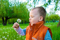 The boy with a dandelion Stock Image