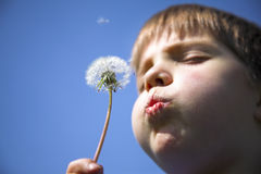 Boy with dandelion Stock Photos