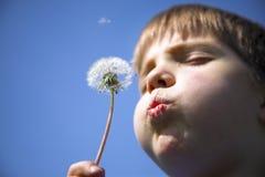 Boy with dandelion stock photos