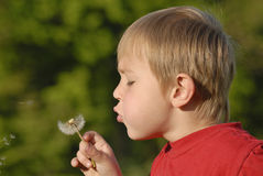 Boy with dandelion Stock Images