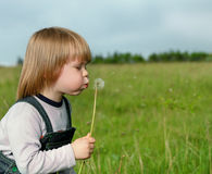 The boy and a dandelion Stock Photos