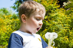 Boy with dandelion. Cute 6 years old boy with dandelion outdoors at sunny summer day Stock Photo