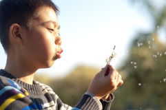 Boy with a dandelion royalty free stock photos