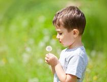 Boy and dandelion Stock Images