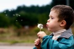 Boy with a dandelion. Boy blowing on the dandelion Stock Image