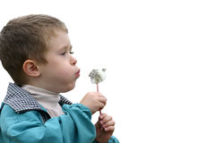 Boy with a dandelion. Separated Stock Photography