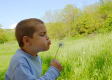 Boy and a dandelion Stock Photography