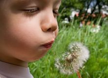 Boy and Dandelion Stock Photography