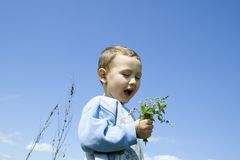 Boy with dandelion Stock Photo
