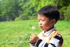 Boy & dandelion Royalty Free Stock Photography