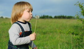 The boy and a dandelion Royalty Free Stock Image