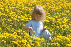 Boy in a dandelion field Royalty Free Stock Photography