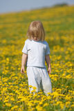 Boy in a dandelion field Stock Photography