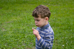 Boy with dandelion. Boy hold in hend dandelion and blow on it. He is dressed in blue stripy shirt. He is curly-headed Royalty Free Stock Photography