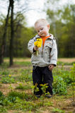 Boy and dandelions Royalty Free Stock Images