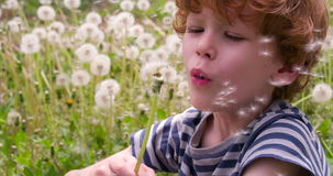 Boy and Dandelions. Funny curly boy sitting on a glade of dandelions and blows one of them. Slow Motion 120 fps stock footage