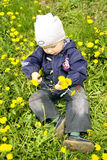 Boy with dandellions Royalty Free Stock Images
