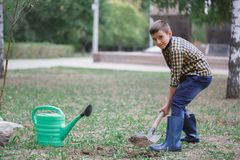The boy is digging the earth in a park autumn. Person digging in garden Royalty Free Stock Photography