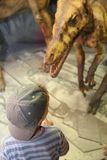 Boy and dinosaur in museum Stock Image