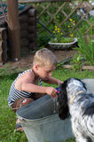 The boy and dog. The child with a dog play to a basin with water Royalty Free Stock Photo