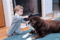 Boy and dog. Young boy combing a dogs coat in house dog bigger than boy Royalty Free Stock Image