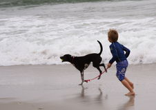 Boy and dog. At the beach stock image