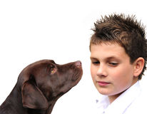 Boy and dog Stock Image
