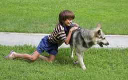 Boy and dog. Boy plays with big dog on summer Stock Images