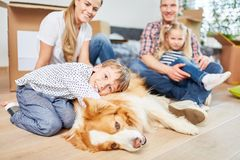 Boy with a dog as best friend royalty free stock image