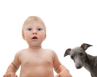 Boy and dog with Royalty Free Stock Photo