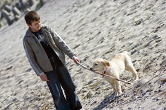 Boy with dog on beach Stock Photo