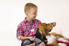 Boy with a dog beagle Stock Images