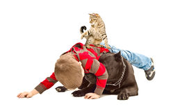 The boy, dog and cat fun playing together Royalty Free Stock Images