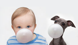 Boy and dog with chewing gum Royalty Free Stock Images