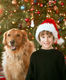 Boy and Dog at Christmas. Time in Front of Tree Royalty Free Stock Photo
