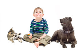 Boy, dog and kitten sitting together Royalty Free Stock Images