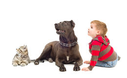 Boy, dog and kitten together looking up Stock Images