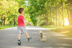 Boy with dog. Boy play with dog in the park Stock Photo
