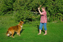 Boy and dog playing Royalty Free Stock Image